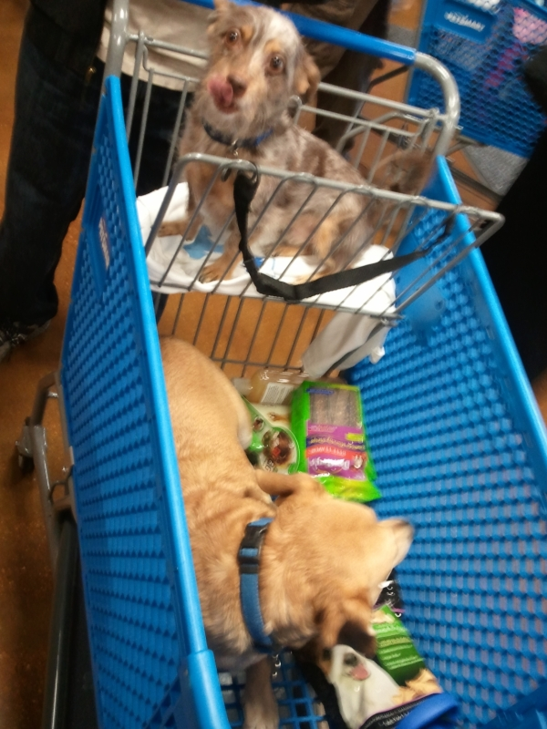 Bailey and Reese at PetSmart